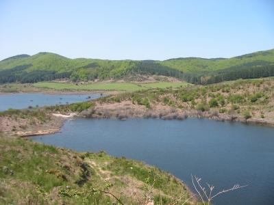 """Lupi avvistati nei boschi delle Serre, l'appello del Wwf: """"Vanno difesi"""" – IL VIDEO"""