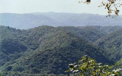 Un parco eolico nelle Serre, il Comune di Simbario dice sì al progetto