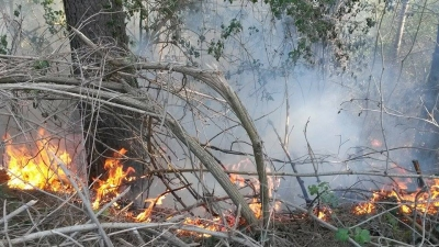 """Serra, incendio di vaste dimensioni in località """"Croce Ferrata"""""""